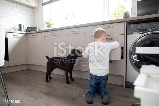 A shot of a young boy in the kitchen, he is looking in the cupboard for snacks with his dog.