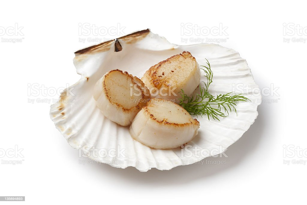 Seared scallops served in a shell with dill royalty-free stock photo
