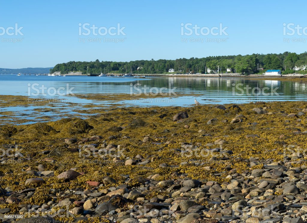 Searsport Maine town pier in distance stock photo