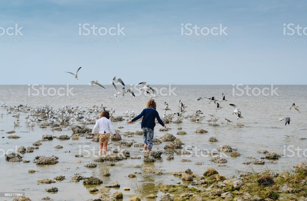 Seascape and Sisterhood zbiór zdjęć royalty-free