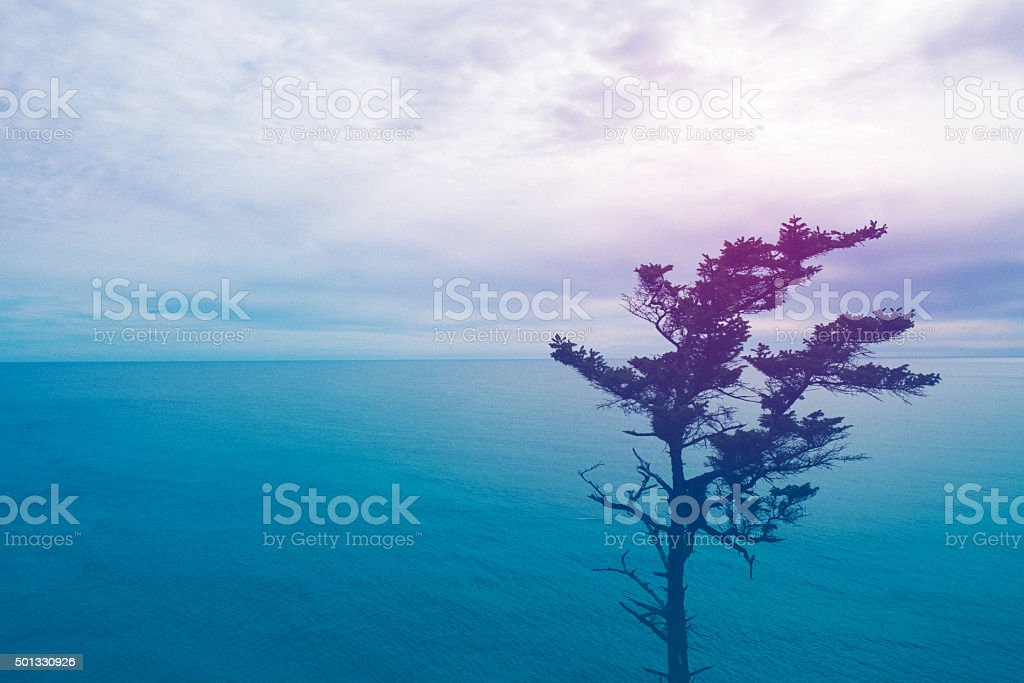 Seascape at sunset with tree - Royalty-free 2015 Stock Photo