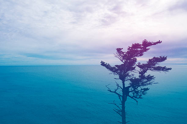 Seascape at sunset with tree stock photo