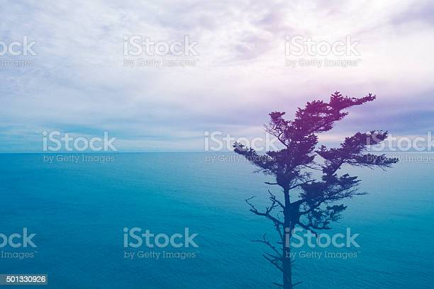 Seascape At Sunset With Tree Stock Photo - Download Image Now