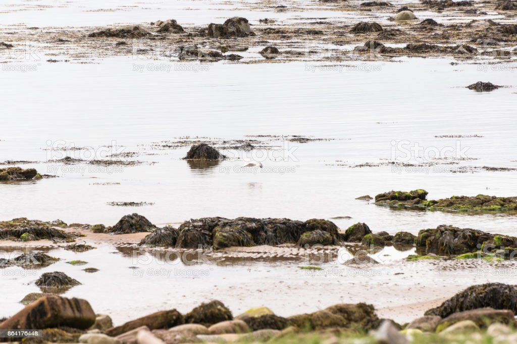 seascape from the dunrobin castle beach royalty-free stock photo