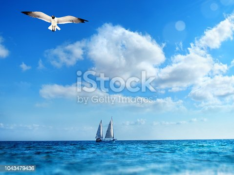Seascape image of  flying seagull and sailing boat over sunny blue sky in Sarasota, Florida