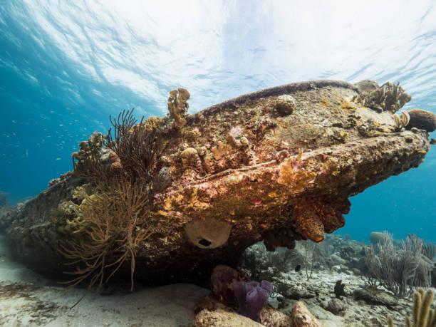seascape of coral reef in caribbean sea around curacao at dive site tugboat saba - parzydełkowce zdjęcia i obrazy z banku zdjęć