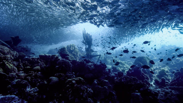 Seascape of coral reef in the Caribbean Sea around Curacao at dive site Playa Grandi with bait ball, various corals and sponges stock photo
