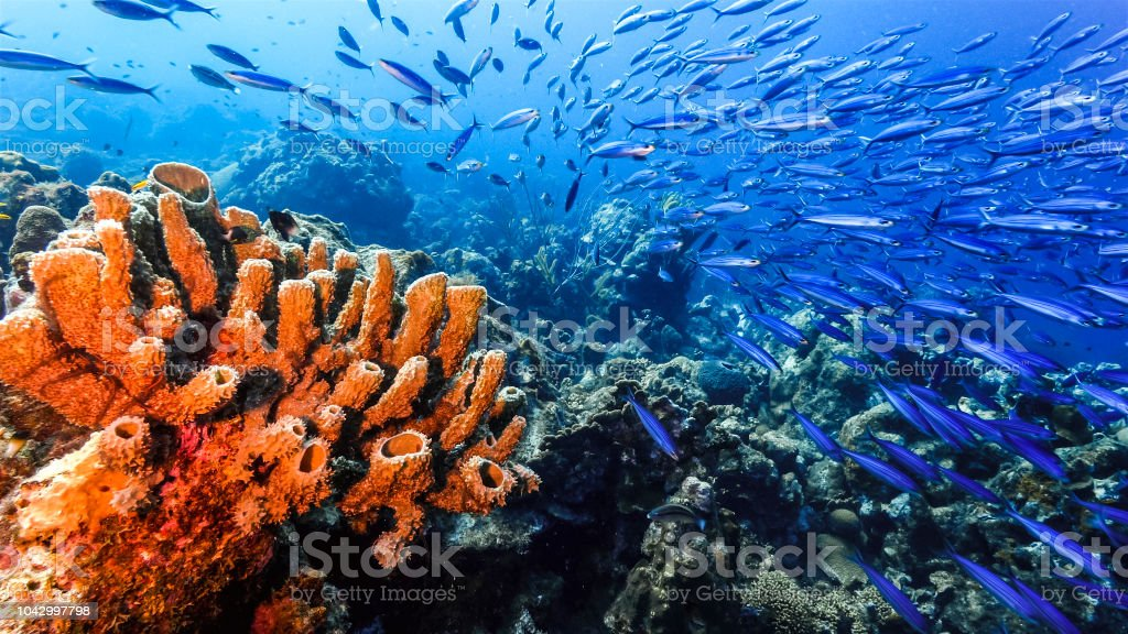Seascape of coral reef in the Caribbean Sea around Curacao with sponge and school of fish stock photo
