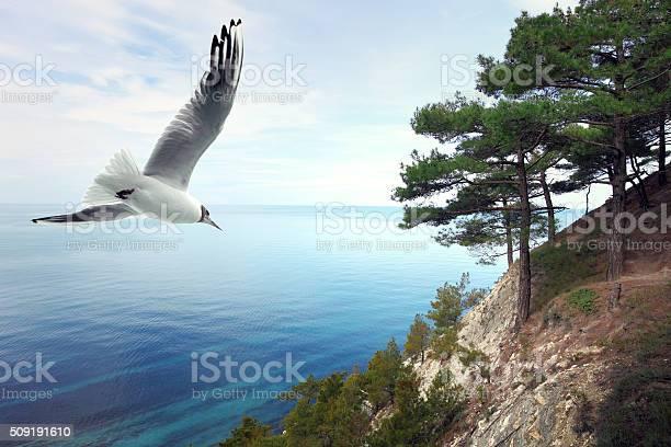 Seascape picture id509191610?b=1&k=6&m=509191610&s=612x612&h=9abgnjysx4ticar kvdnvwuxkvt1 ox3lmcr1zms5bo=