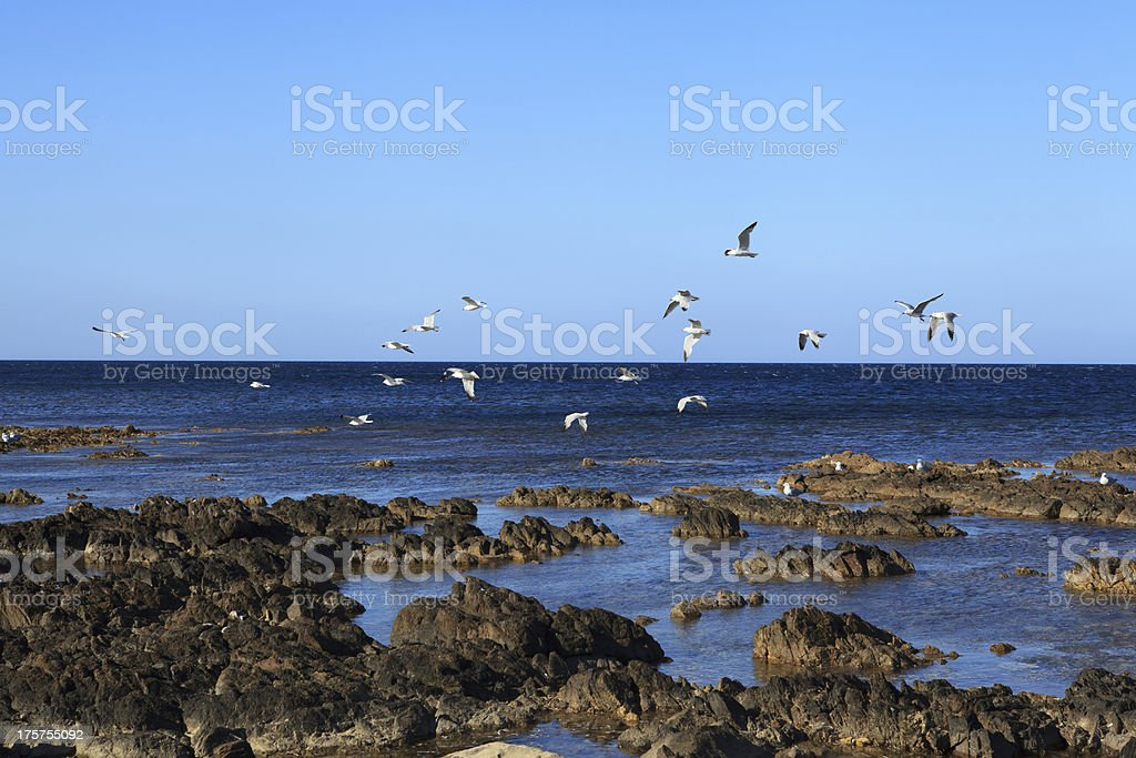 seascape with black rocks and seagulls royalty-free stock photo