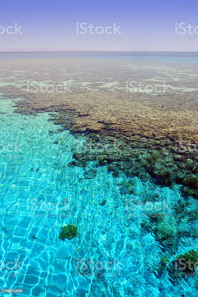 Seascape with coral reef 'Napoleon'. stock photo