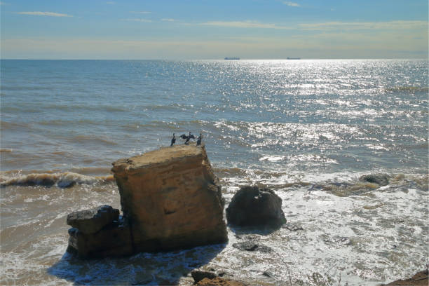 Seascape with cormorants resting on a rock.