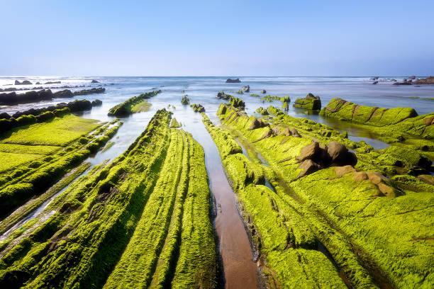 Paisaje marino con musgo verde alga sobre rocas en Barrika - foto de stock
