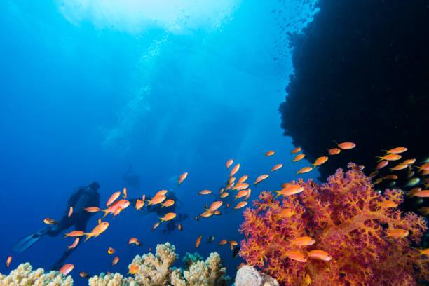 Seascape with lyretail anthias stock photo