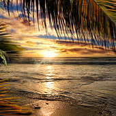 Empty seascape with palm leaf over orange color sunset sky with shinning sun
