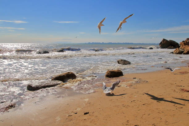 Seascape with seagulls.