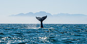 Seascape with Whale tail.