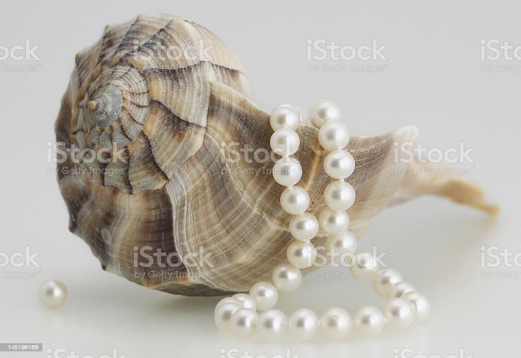 seashell and pearls stock photo