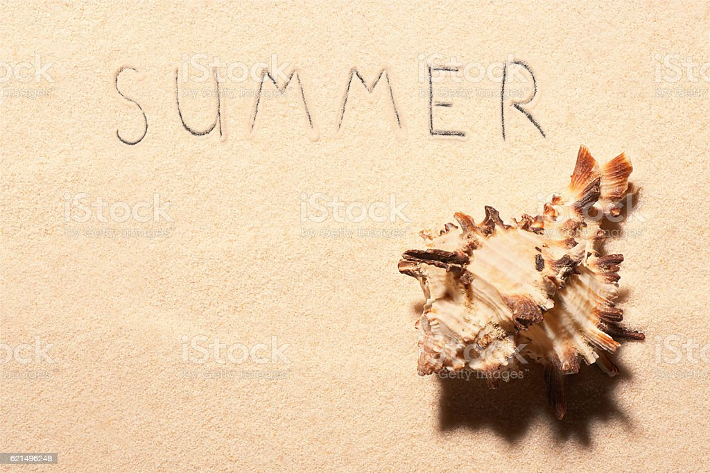 Seashell and summer lettering drawn on sand Lizenzfreies stock-foto