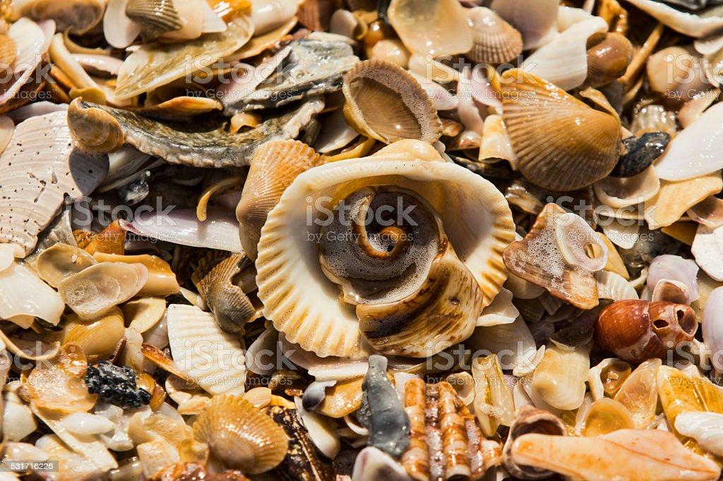 Seashell Assortment stock photo