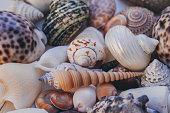 貝殻の背景。一緒に積んで別の貝殻がたくさん。貝殻のコレクションです。テクスチャとデザインの背景として多くの異なる貝殻のクローズ アップ ビュー。