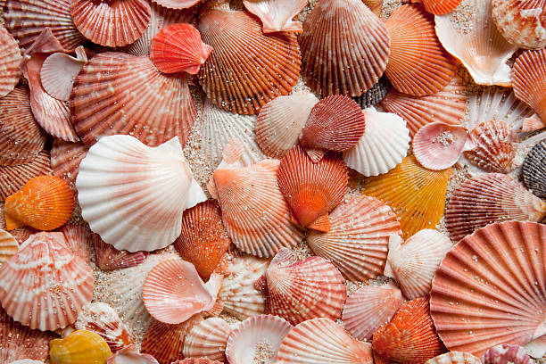 seashell background - pink and orange seashell background stockfoto's en -beelden