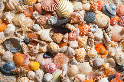large variety of shells from the Mediterranean Sea