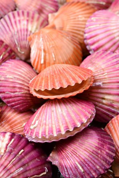 achtergrond van de zeeschelp - pink and orange seashell background stockfoto's en -beelden