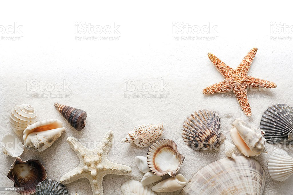 seashell beach sand and starfish frame border on white background stock photo more pictures of. Black Bedroom Furniture Sets. Home Design Ideas