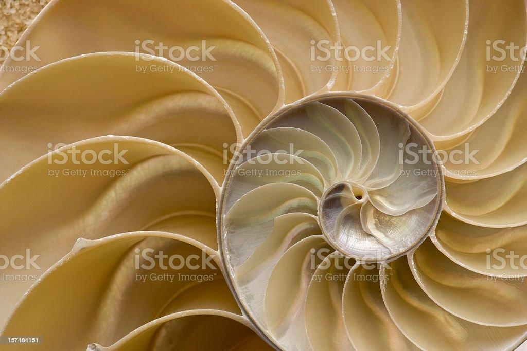 Seashell - Chambered Nautilus Shell Detail. Full Frame. stock photo