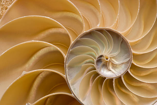 seashell - chambered nautilus shell detail. full frame. - nautilus stock pictures, royalty-free photos & images