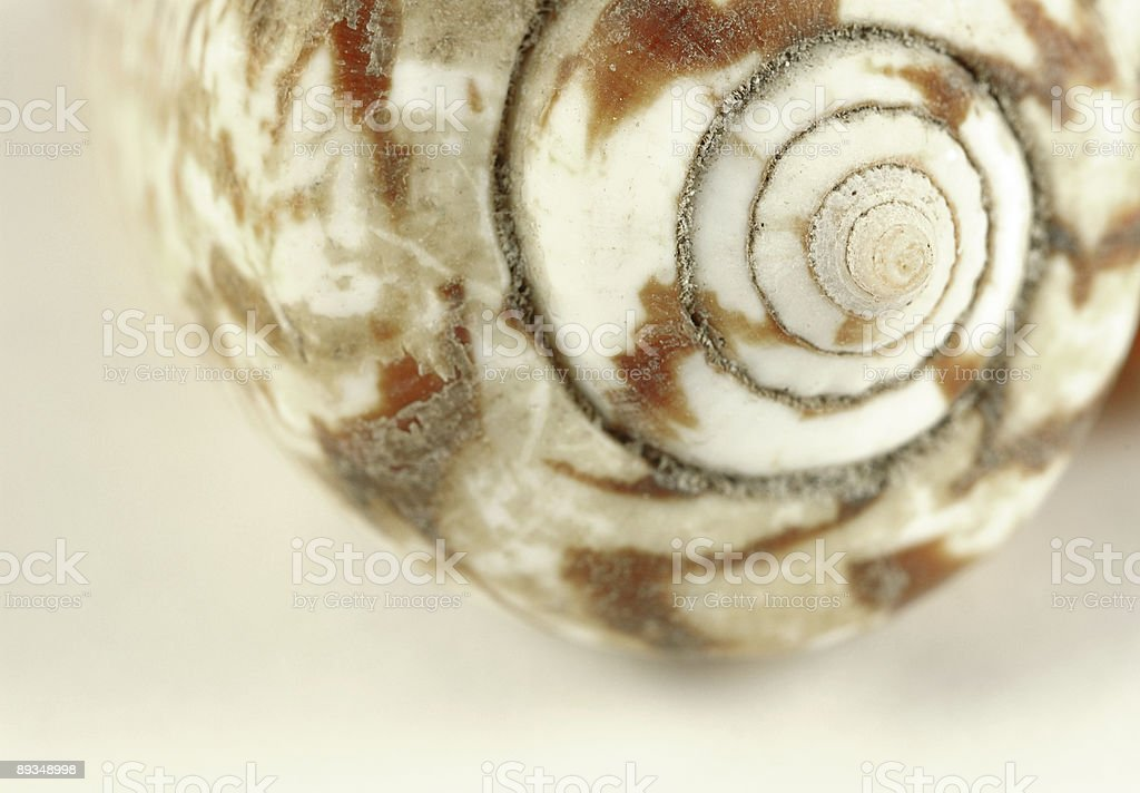 Seashell closeup royalty-free stock photo