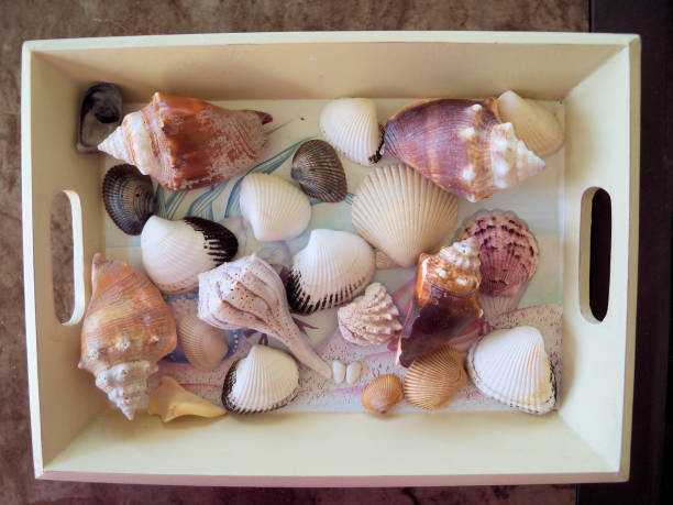 Seashell collection stock photo