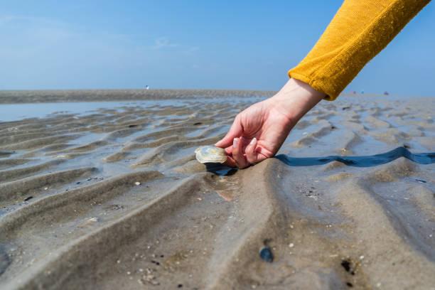 seeschall in der hand nordsee - urlaub norderney stock-fotos und bilder
