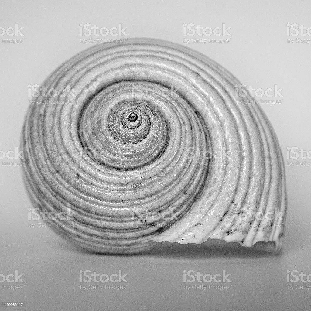 Seashell isolated on floor stock photo