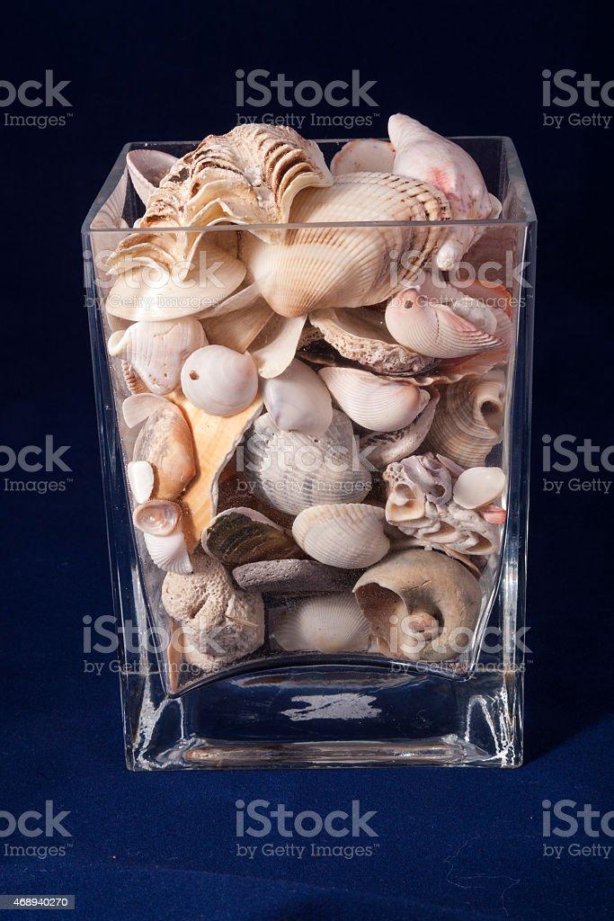 Seashell isolated on the blue background stock photo