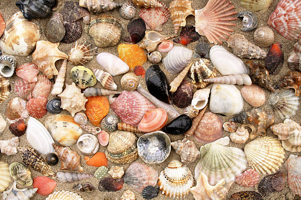 Seashell mix foto
