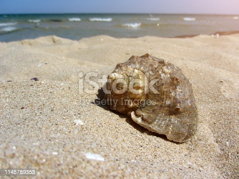 Close up shot of a brown decorative seashell, in beach sand with sea waves in background.