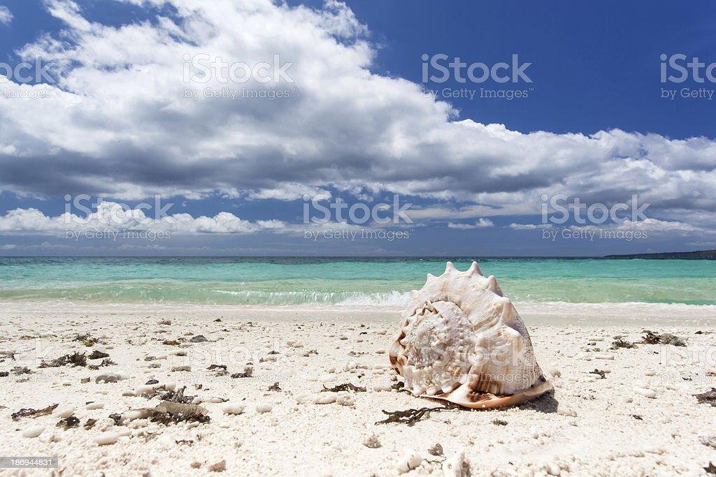 Seashell on beach stock photo