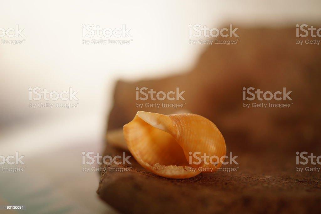 Seashell on ceramics stock photo