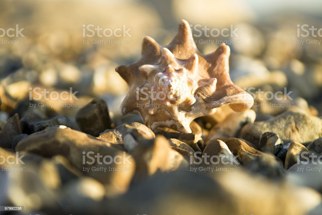 Seashell on pebbles royalty-free stock photo
