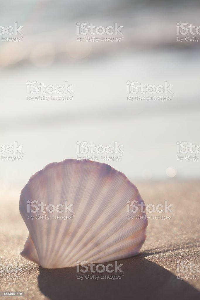 seashell on the beach- Image of tropical sandy beach and seashell. Summer concept stock photo