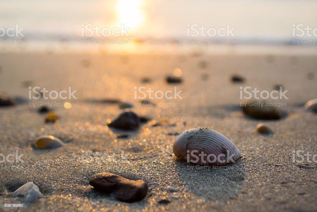 Seashell on the Beach stok fotoğrafı
