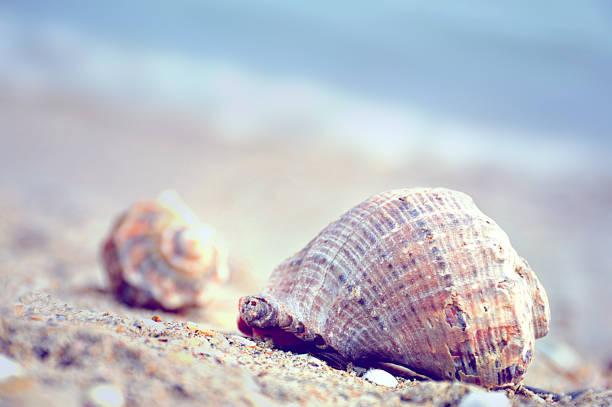 Seashell on the beach stock photo