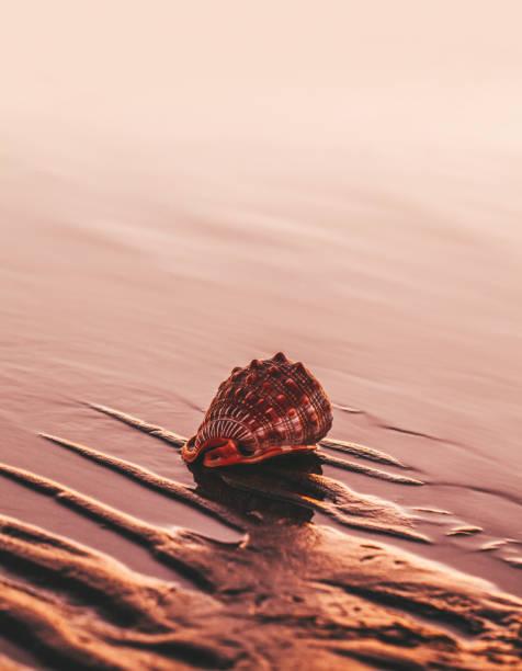 conchas na praia - concha parte do corpo animal - fotografias e filmes do acervo