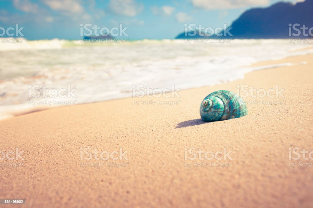 Seashell on the beach stock photo