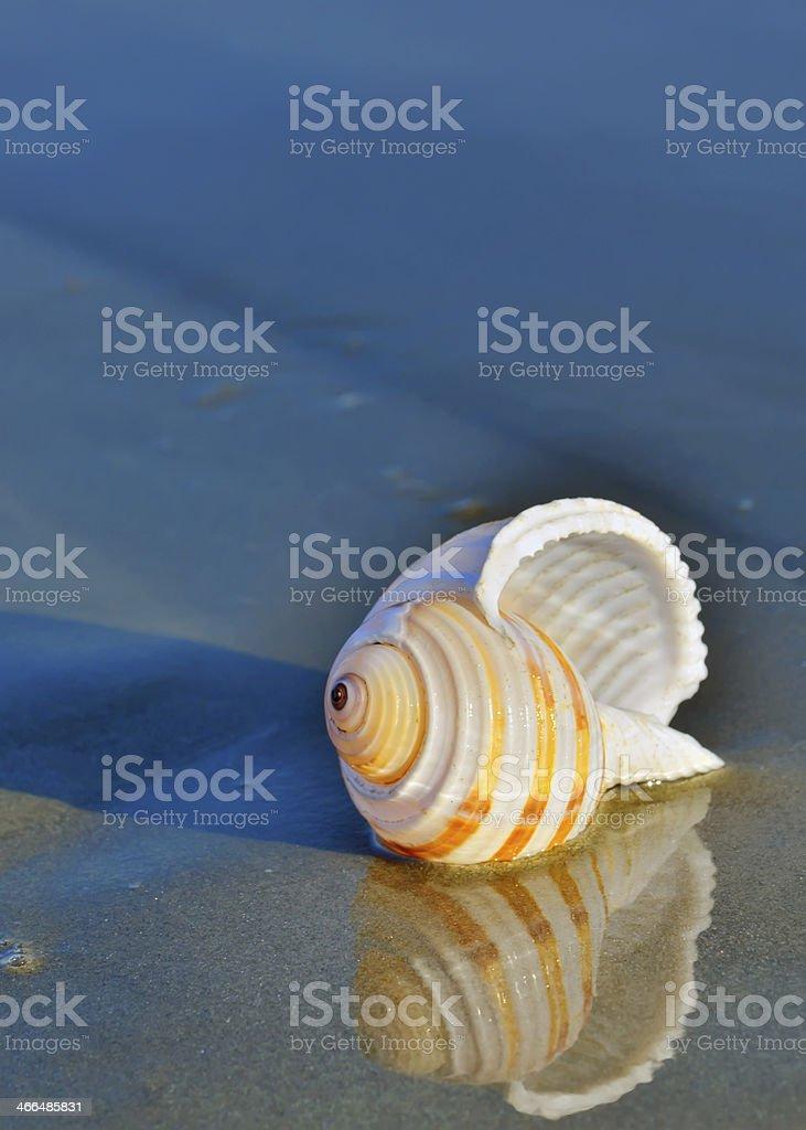 seashell on the seashore stock photo