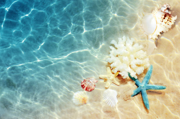 coquillage sur la plage de l'été dans l'eau de mer. historique de l'été. heure d'été. - coquillage photos et images de collection