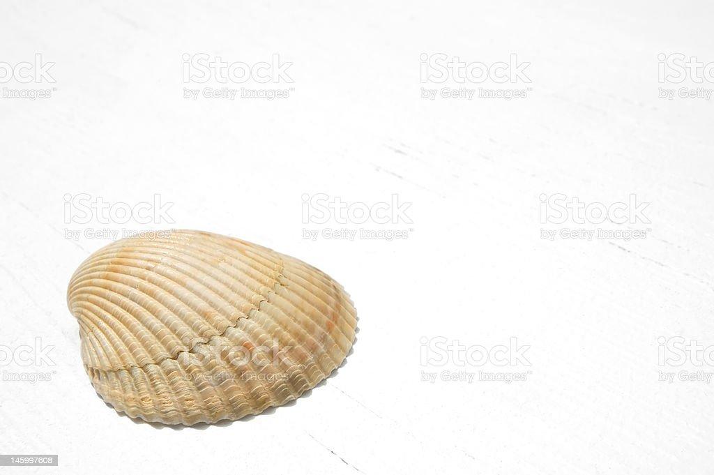 Seashell on White Wood royalty-free stock photo