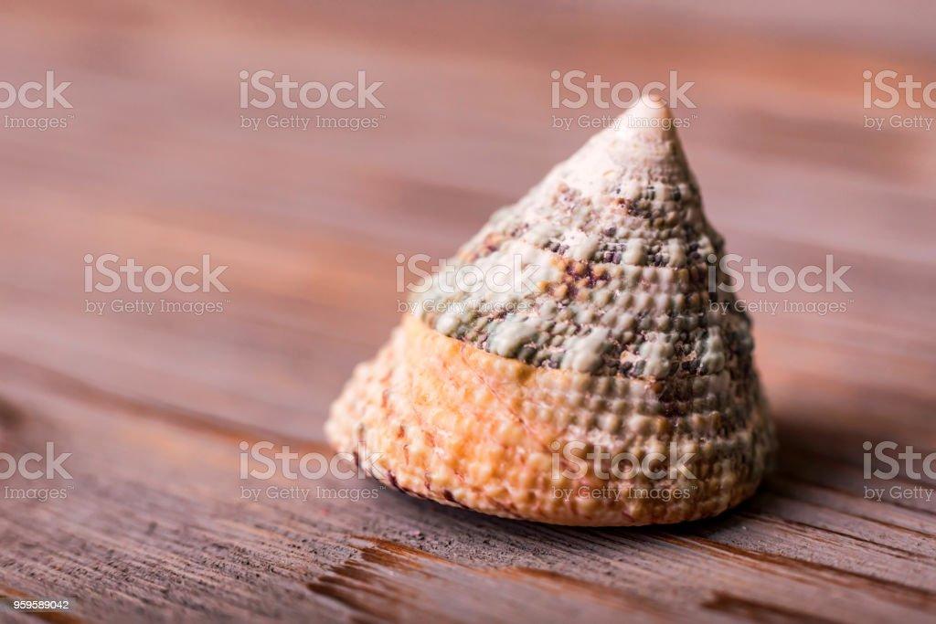 Seashell on wooden background close stock photo
